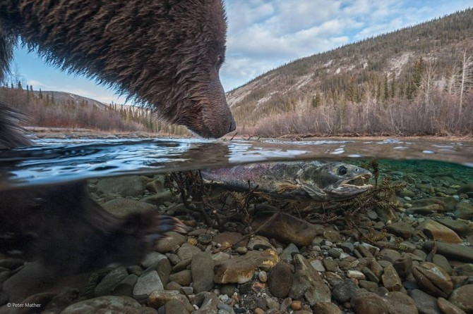 Wildlife Photographer Of The Year - 'Whats This' by Peter Mather