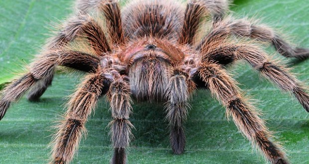 spider-620x330