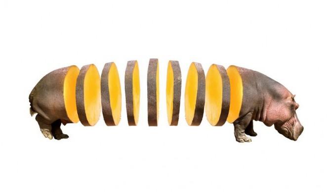 Animal Food Mashup 4