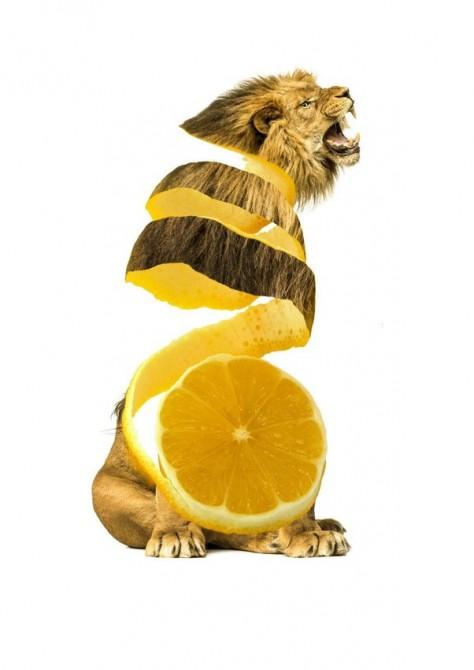 Animal Food Mashup 5