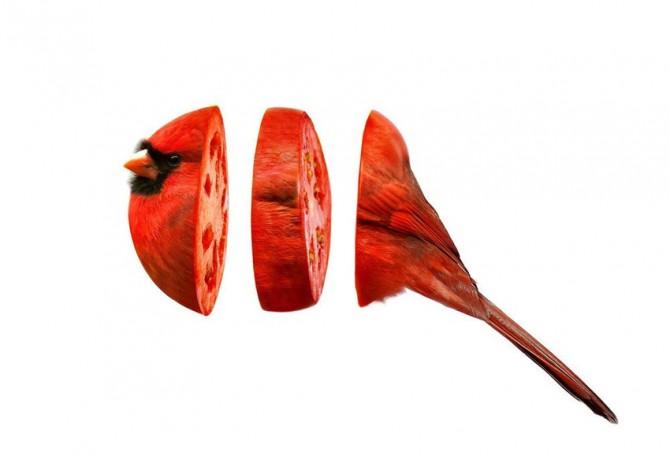Animal Food Mashup 6