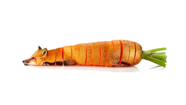 Animals Photoshopped As Vegetables Featured