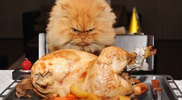 Garfi Angry Cat Featured