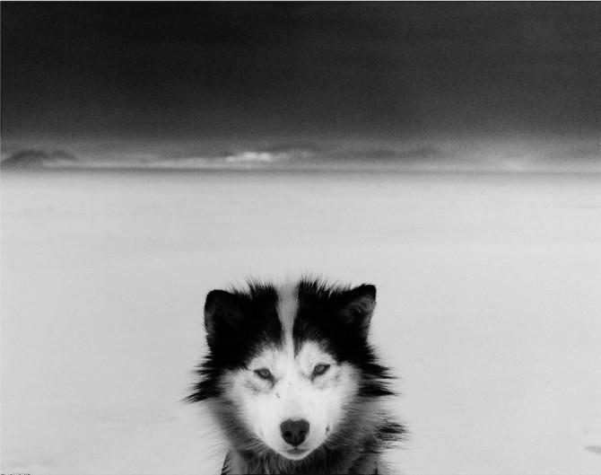 Ragnar Axelsson RAX - wolf