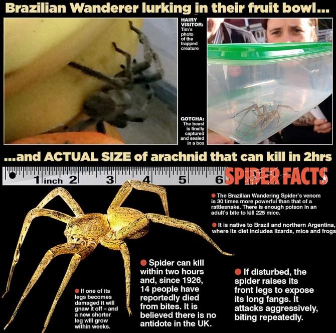 Spider Graphic.jpg