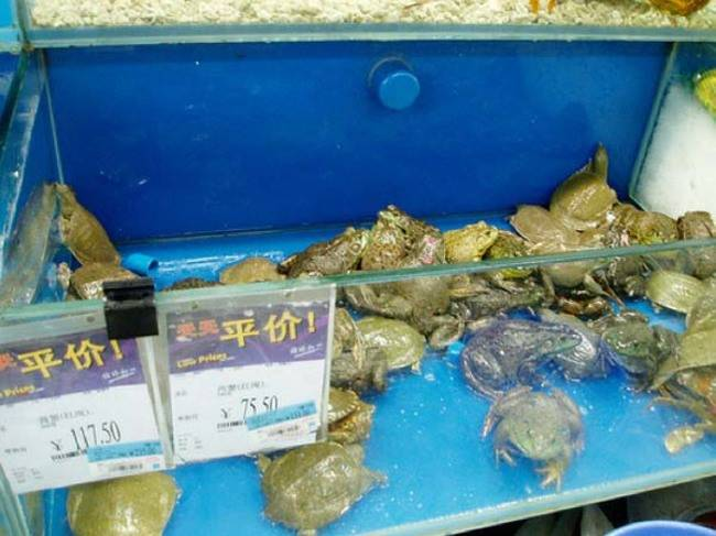 Chinese Walmart Pictures 13