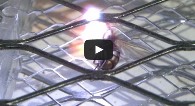 Electrocuted Fly Slo Mo