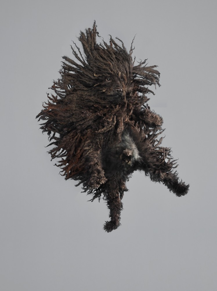 Flying Dogs 3