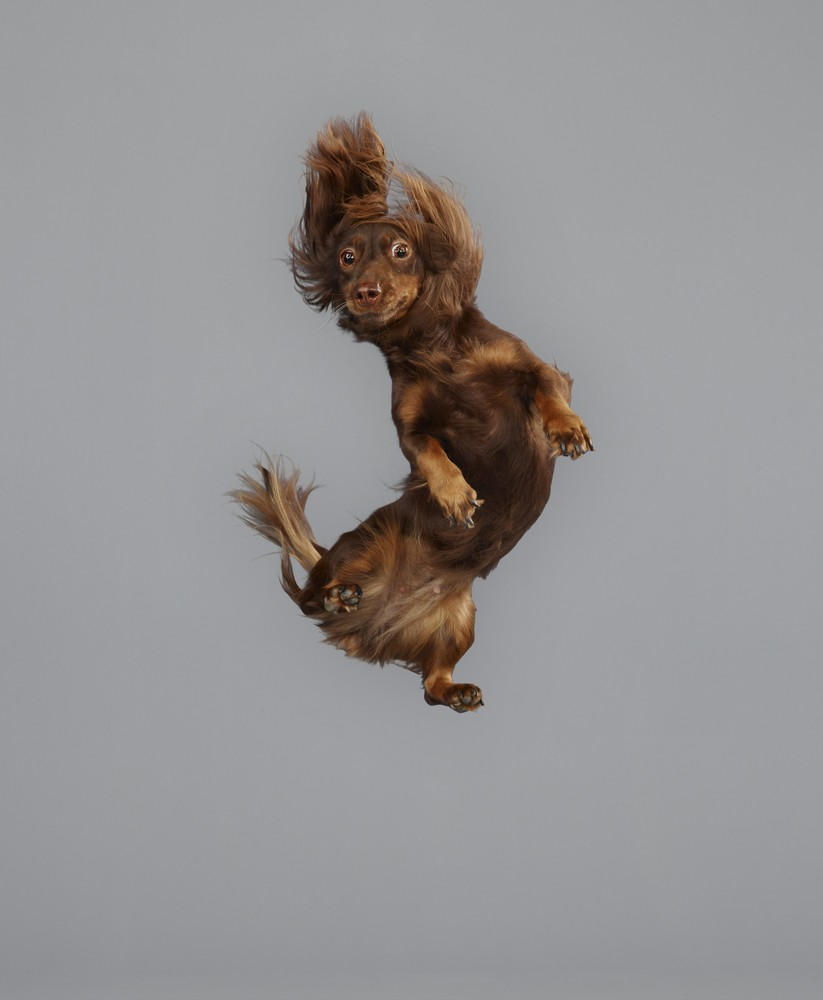 These Flying Dog Photographs Are The Best Thing You Ll See