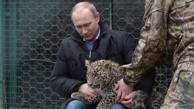 """Résultat de recherche d'images pour """"putin amur tiger"""""""
