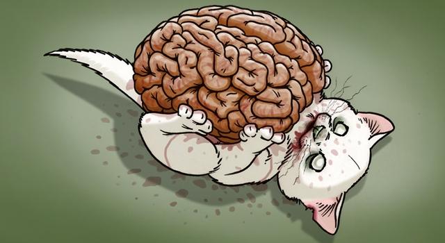 Philosophy Questions - Brain