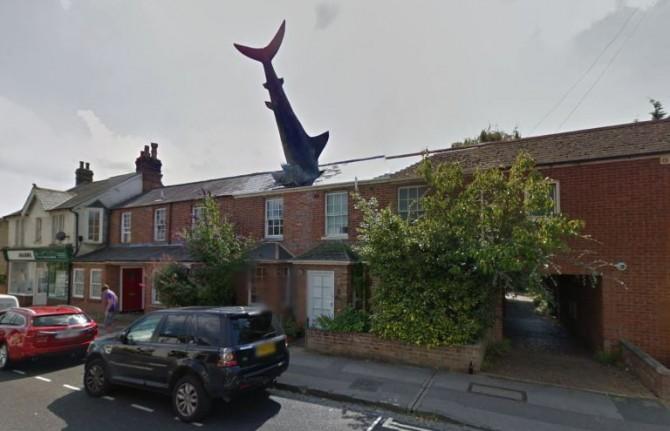 Shark House 1