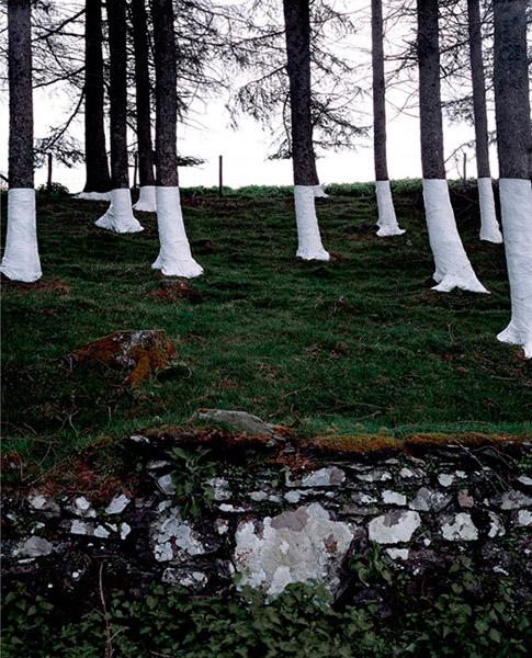 Zander Olsen - Tree, Line - Duncan Wood 2004