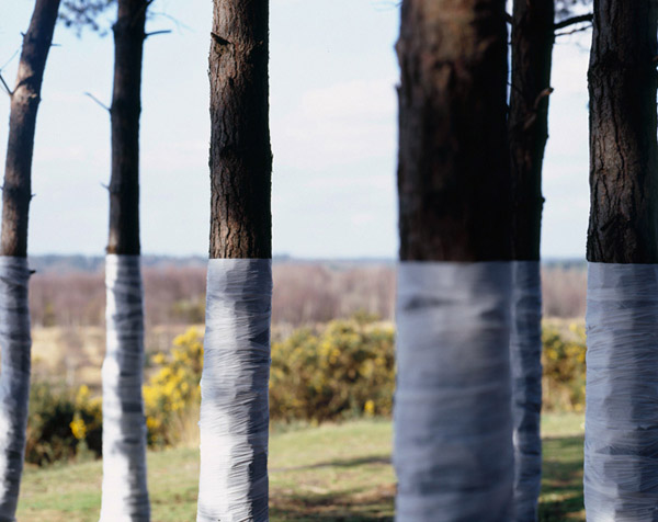Zander Olsen - Tree, Line - Flat Line 2005