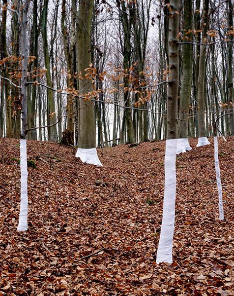 Zander Olsen - Tree, Line - Jhutti 2004