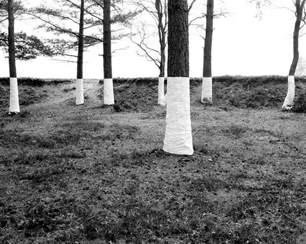 Zander Olsen - Tree, Line - No Mans Land 2004