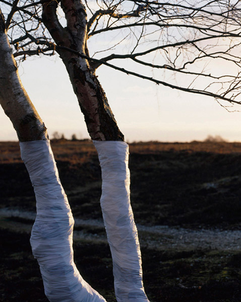 Zander Olsen - Tree, Line - Two 2005