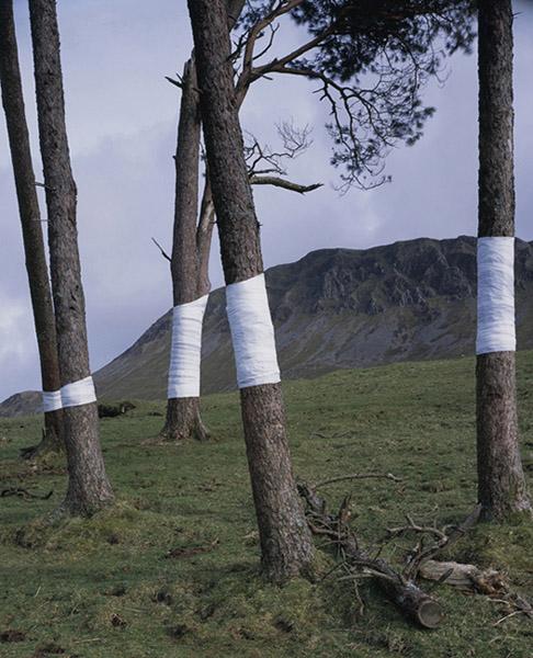 Zander Olsen - Tree, Line - Untitled (Cader) 2008