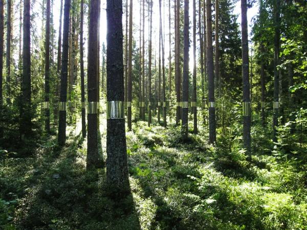 Zander Olsen - Tree, Line - fabric and mirror