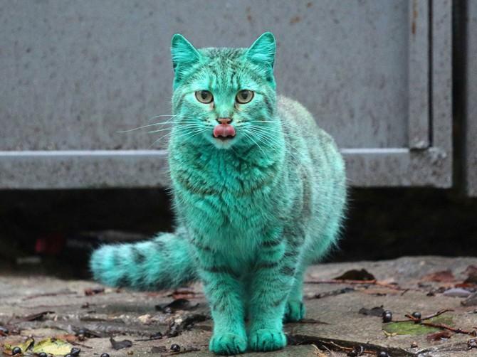 Green Cat 1
