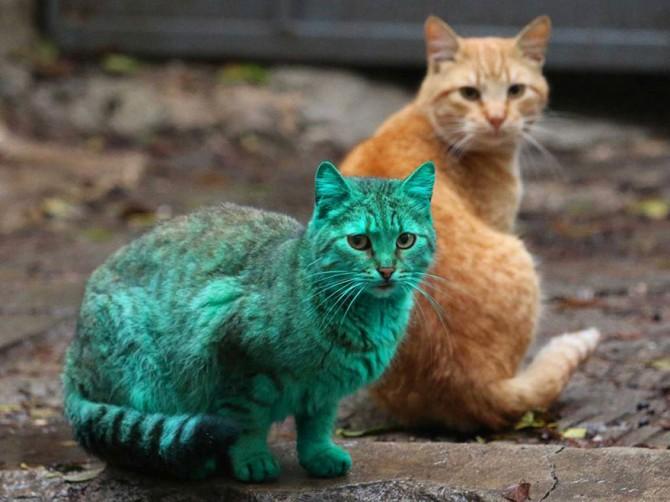 Green Cat 2