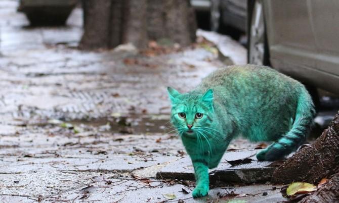 Green Cat 3