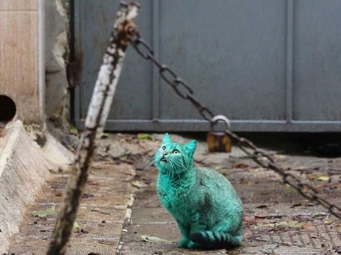 Green Cat 4