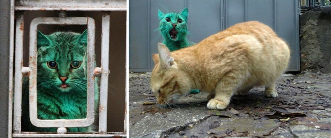 Green Cat 5