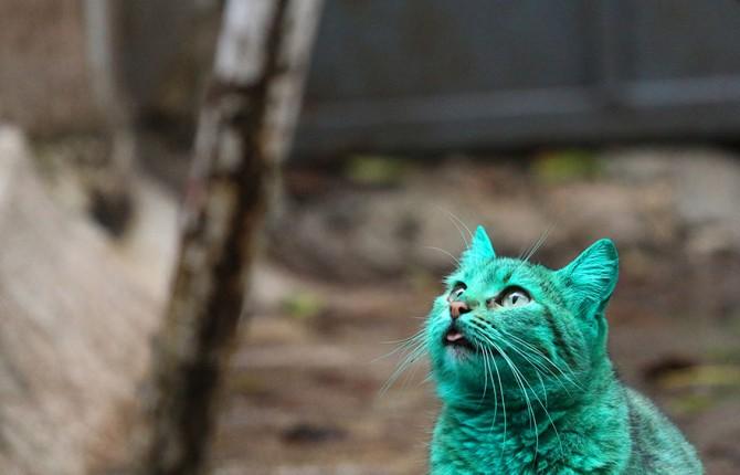 Green Cat 6