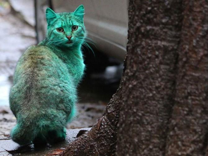 Green Cat 7