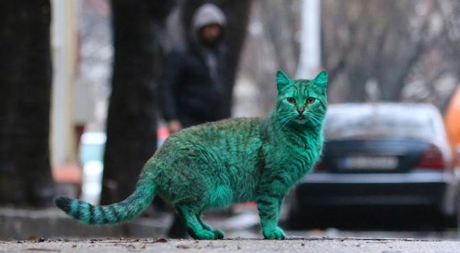 Green Cat 8