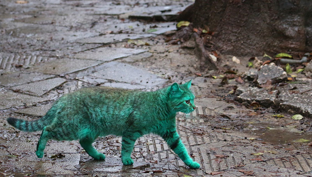 Green Cat Featured