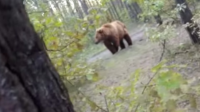 Grizzly Bear Chases Man Bike