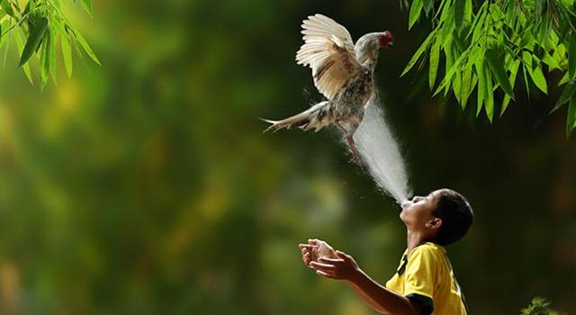 Herman Damar Indonesia - chicken wash