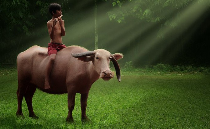 Herman Damar Indonesia - cow and flute