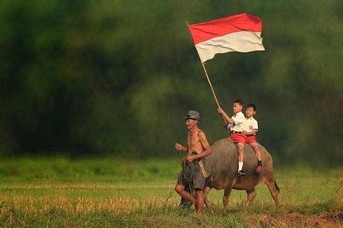Herman Damar Indonesia - flag on cow