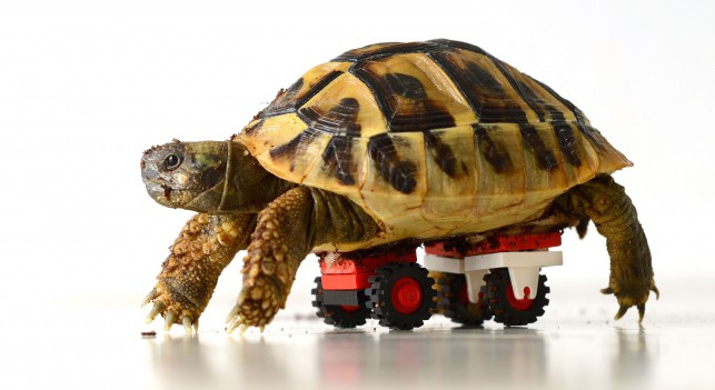 LEGO Tortoise