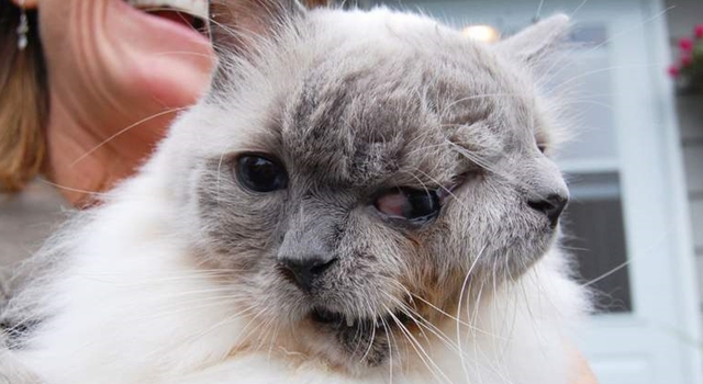 Two Faced Cat - oldest