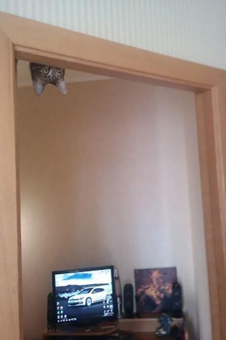 Ninja Cat 10