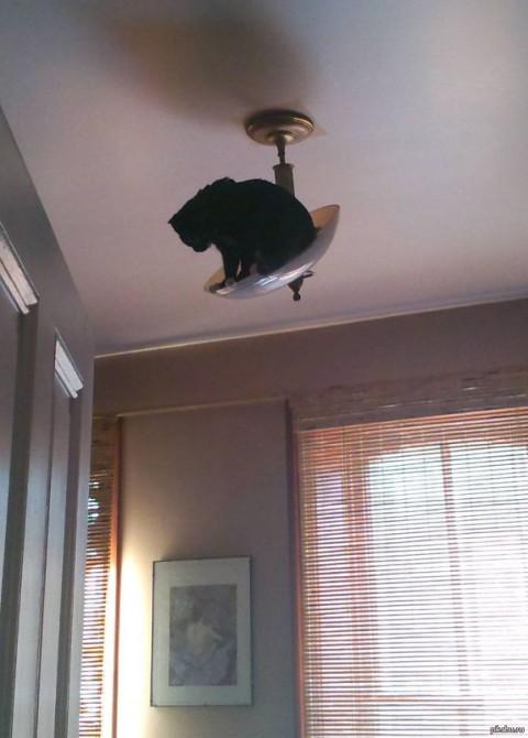 Ninja Cat 18