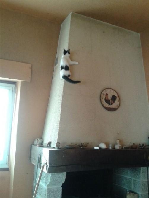 Ninja Cat 28