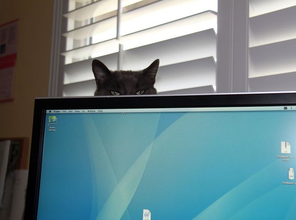 Ninja Cat 38