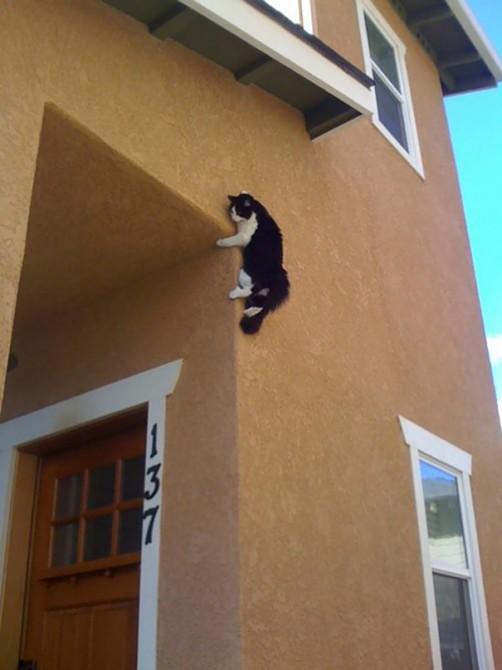 Ninja Cat 4