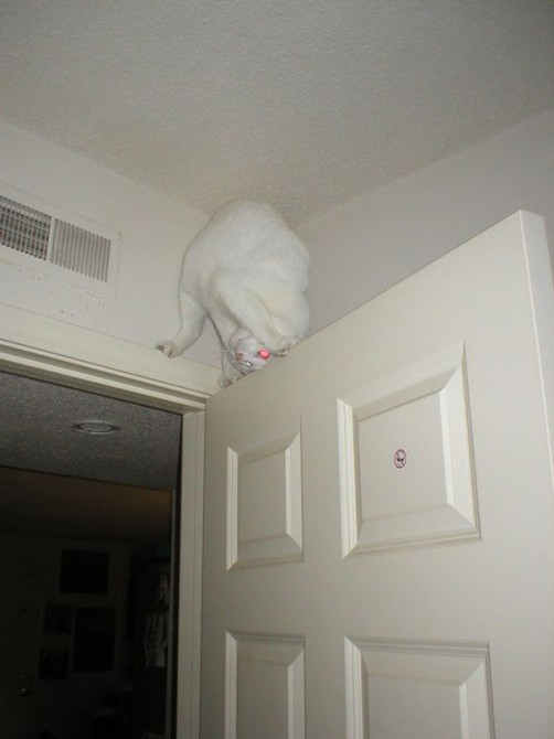 Ninja Cat 8