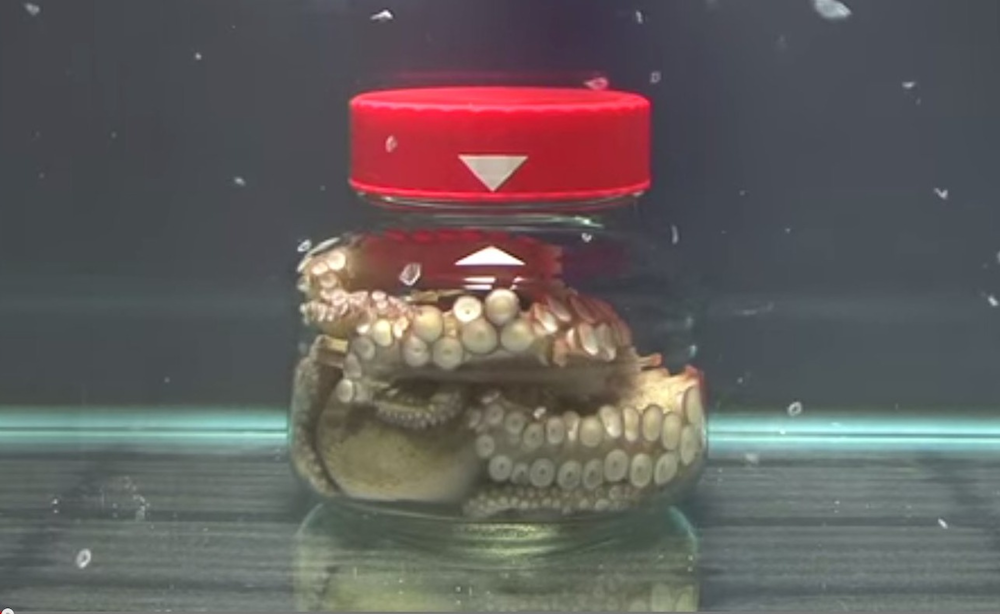 Octopus In Jar