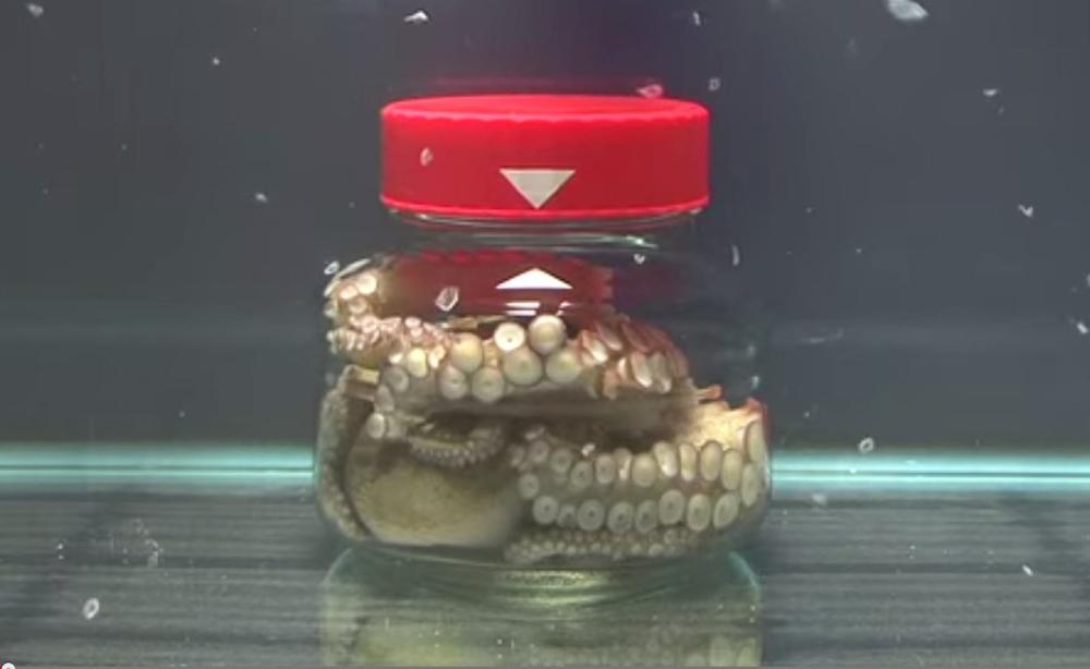 Octopus In Jar