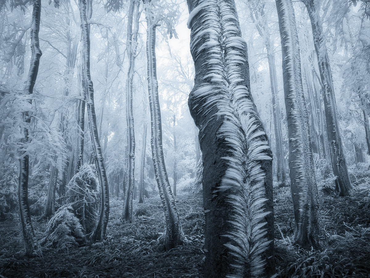 Amazing Forest - Czech Republic - frost on trees