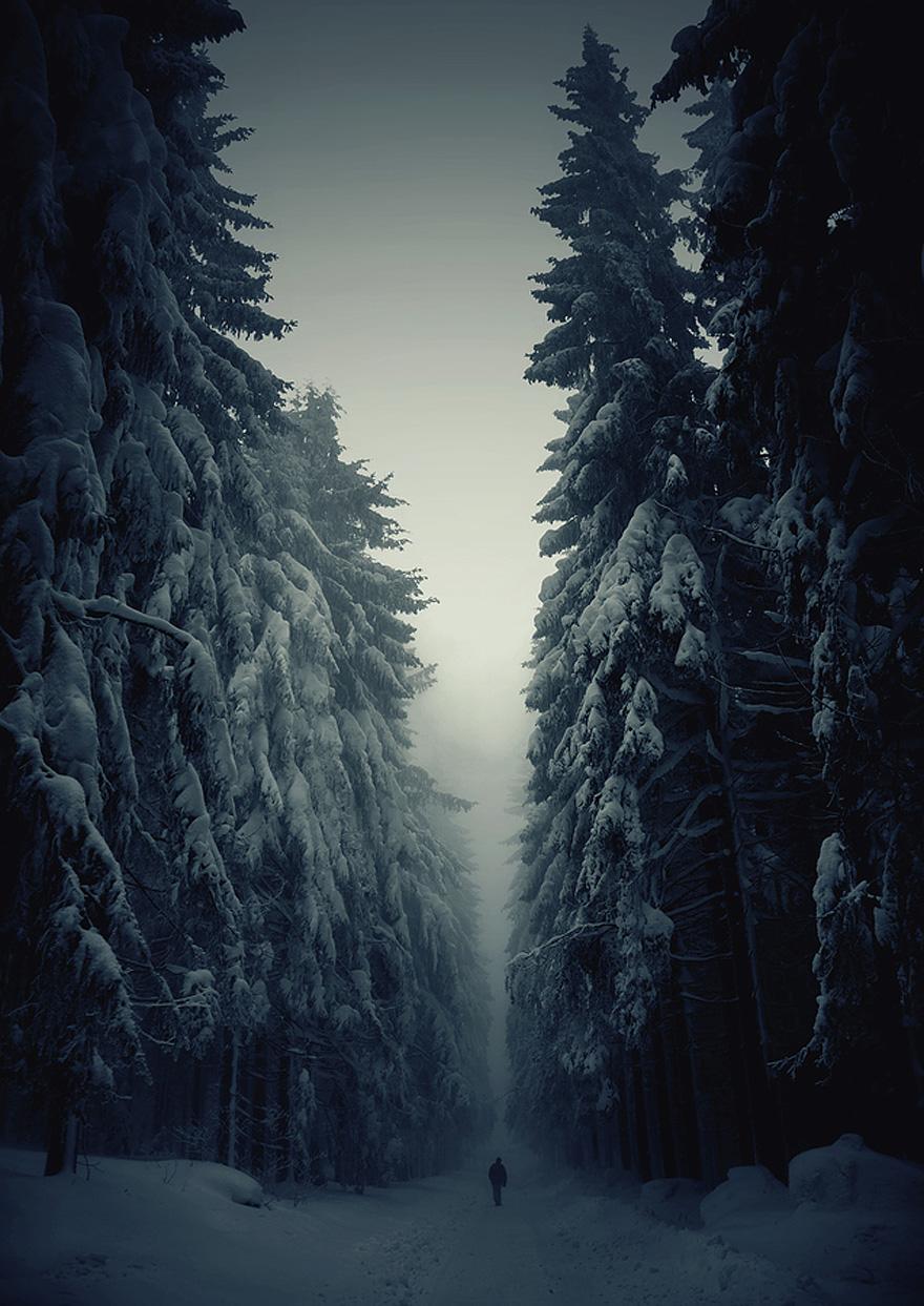 Amazing Forest - Czech Republic