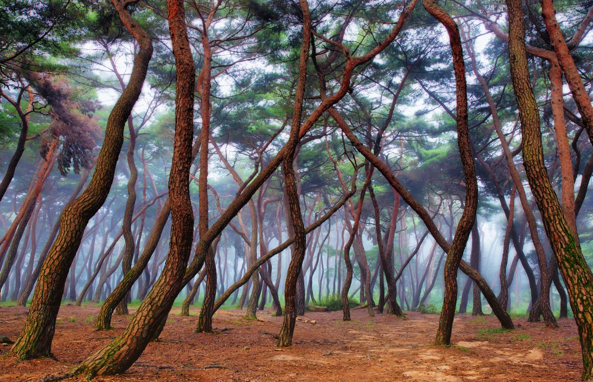 Amazing Forest - Misty Forest