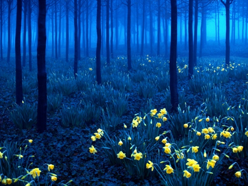 Amazing Forest - North Greenwich, London, England